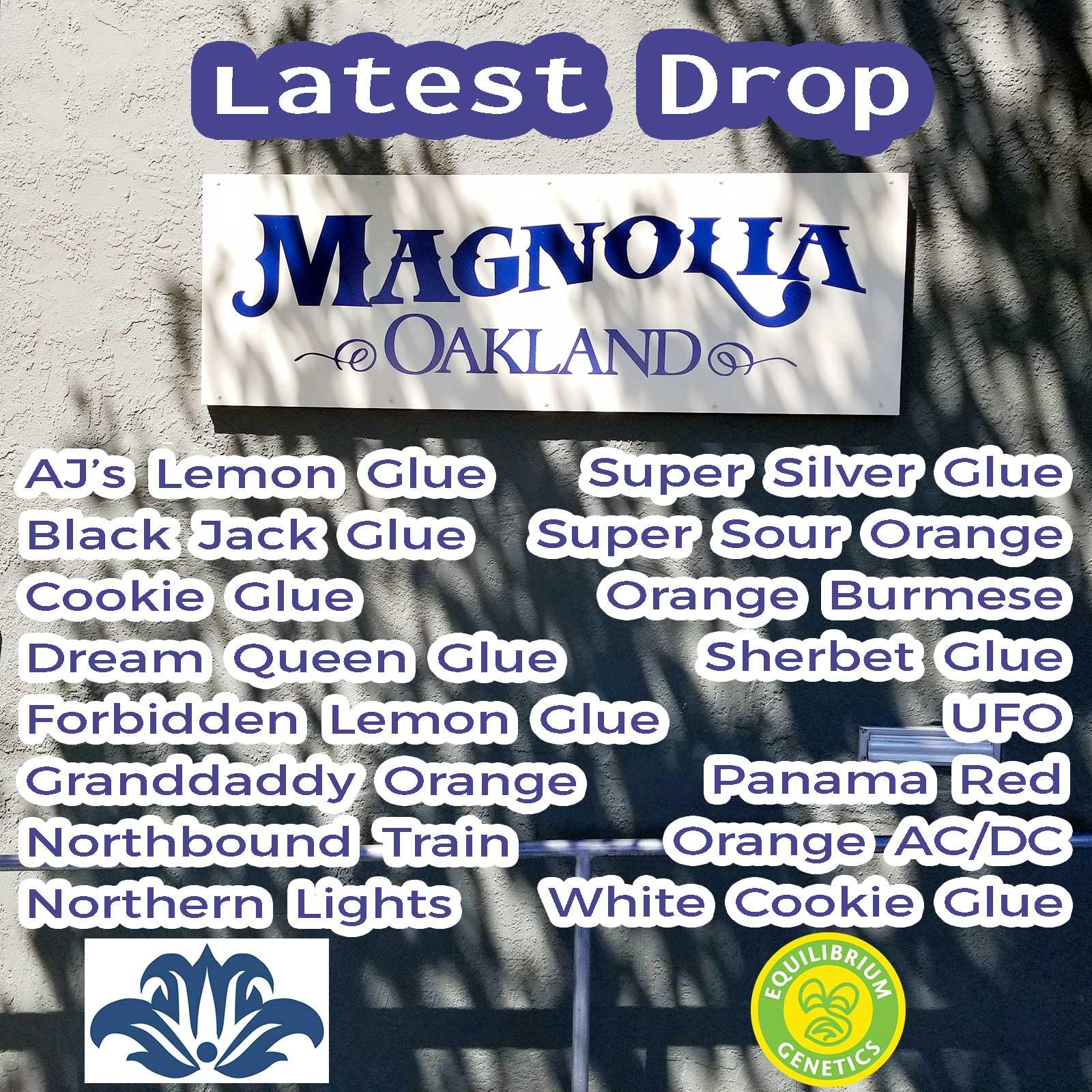 Latest Drop: Magnolia Oakland