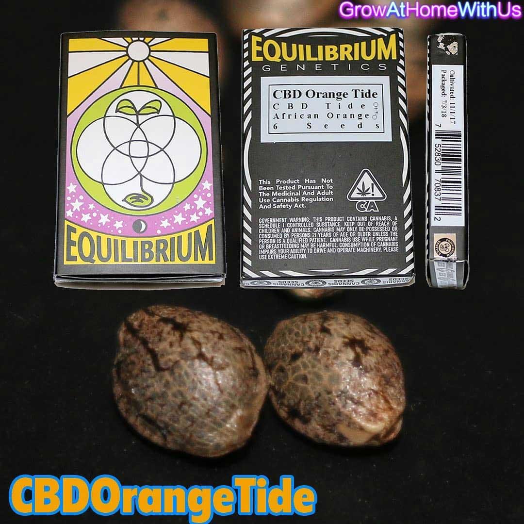 CBD Orange Tide | Equilibrium Genetics