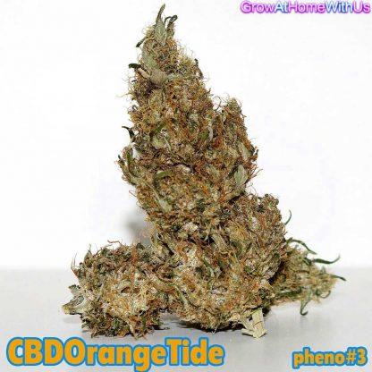 CBD Orange Tide