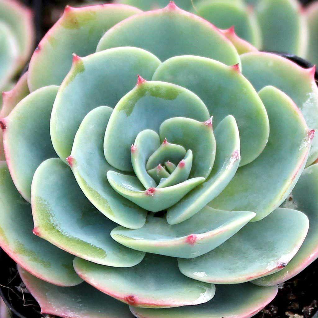 Widespread Gardening