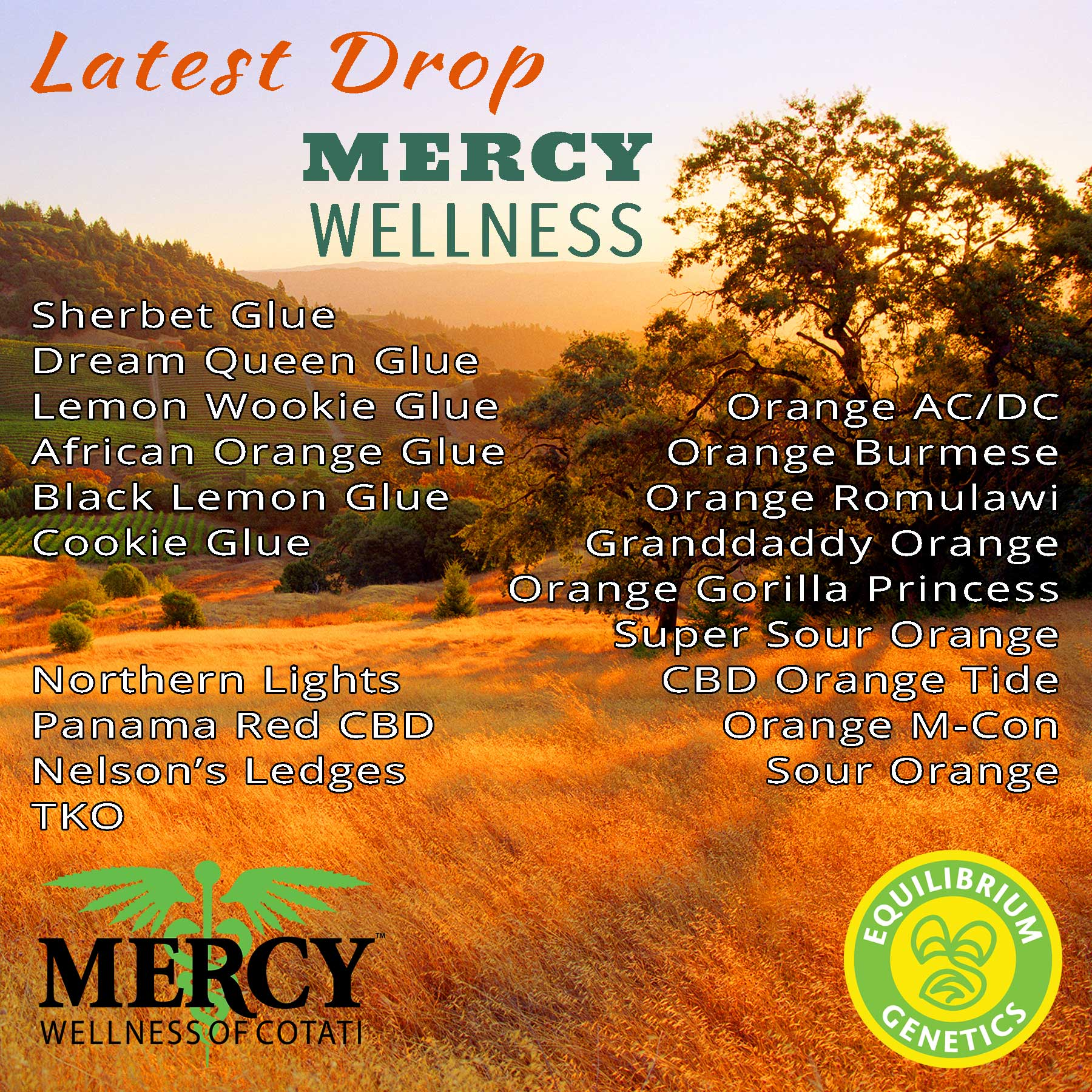 Latest Drop: Mercy Wellness